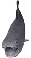 Dunkleosteus.png