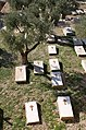East Jerusalem - Mount of Olives - 08 (4261506381).jpg