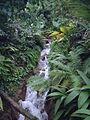 Eden Project (927434798).jpg