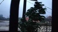 File:Effect of Heavy wind during Fani Cyclone.webm