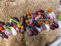 不同品種的茄子,不同的形式和顏色(紫色,綠色,紅色,白色和黃色),顯示茄子多樣性。