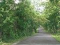 El pequeño camino.. - panoramio.jpg