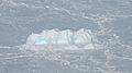 Embedded iceberg (8093677738).jpg