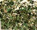 Emerald Slices (380596127).jpg