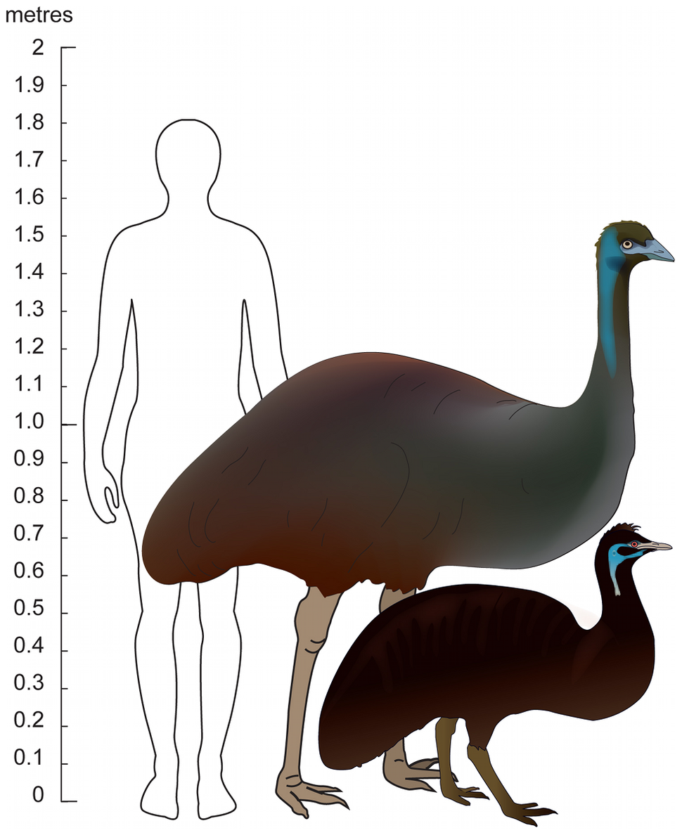 Emu size