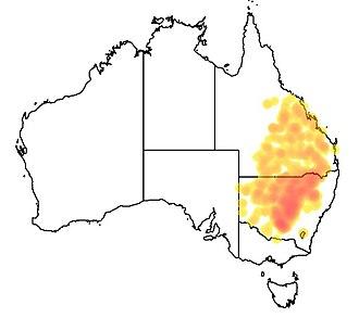 Eucalyptus populnea - Image: Eucalyptus populnea range