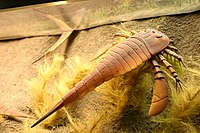 Eurypterus Smithsonian.jpg