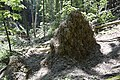 Fák alulnézetből -(( - panoramio.jpg