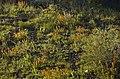 FIELD OF WILDFLOWERS-MALHEUR (23305004233).jpg