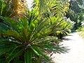 Fale - Giardini Botanici Hanbury in Ventimiglia - 647.jpg