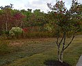 Fall Foliage Breakout (5183376674).jpg