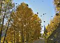 Falling Leaves (8009304756).jpg