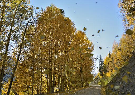 Falling Leaves (8009304756)