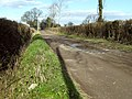 Farm track, Westonzoyland - geograph.org.uk - 1716754.jpg
