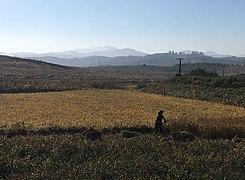Farming near Anju.jpg