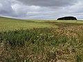 Farmland, Morgan's Hill - geograph.org.uk - 1564974.jpg