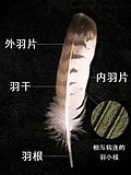 Feather05.jpg
