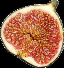 Ficus - Wikipedia