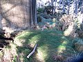 Festuca rubra commutata L. (AM AK298463-2).jpg