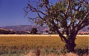 Rockville, California - Field in Rockville