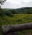 Fields above Nant Moelen - geograph.org.uk - 1337700.jpg