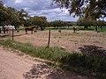Finca Campomanes - panoramio.jpg
