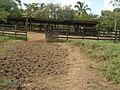Finca Concepcion Aguinada, Coperna, Siuna, RAAN. Nicaragua - panoramio.jpg