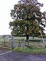 Fine Oak Tree, nr Gayhurst - geograph.org.uk - 1039059.jpg