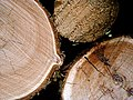 Firewood (210626022).jpg