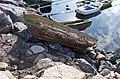 Fishing boat - panoramio (1).jpg