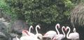 Flamingo photos.png