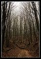 Flickr - Laenulfean - dark winter way.jpg