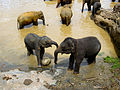 Flickr - ronsaunders47 - ELEPHANT AFFECTION 2.jpg