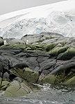 FloreAntarctique (1).jpg