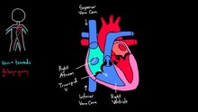 File:Flow through the Heart.webm