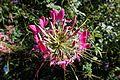 Flower @ Parc Floral @ Paris (30043043392).jpg