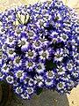 Flower 39 HDR.jpg