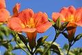 Flowers 2 (167541473).jpeg