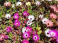 Flowers in gurdum.jpg