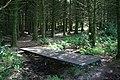 Footpath through the Conifers - geograph.org.uk - 1393271.jpg