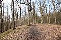 Forêt Départementale de Beauplan à Saint-Rémy-lès-Chevreuse le 21 février 2018 - 04.jpg