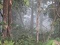 Forest - panoramio (70).jpg