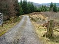 Forest Track - geograph.org.uk - 730137.jpg