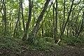 Forest in Mt.Ashio 03.jpg