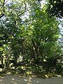 Forest in Suiten Shrine.jpg