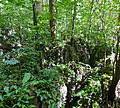 Forest on limestone formations (15474678598).jpg