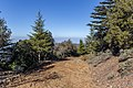 Forest road heading to Mt Tripylos, Troodos Mountains, Cyprus.jpg
