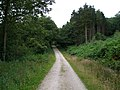 Forestry road in Great Cockerdale Wood - geograph.org.uk - 516093.jpg