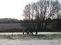 Forget the electric car, bring back the horse^ - geograph.org.uk - 1627823.jpg