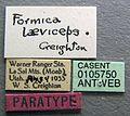 Formica laeviceps casent0105750 label 1.jpg